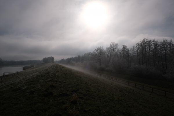 Nebliges Ufer mit Wald und Sonne